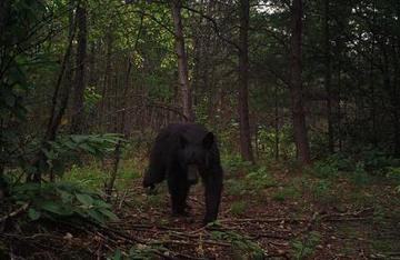 Wildlife after Wildfire in Southern Appalachia | US Forest Service | Forestry Conservation | Scoop.it