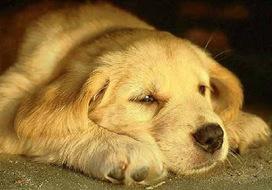 Animali, anche loro si deprimono, si stressano, si angosciano e .. vanno in analisi. | Looking beyond - Guardando oltre | Scoop.it
