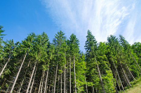 Landowners Monetize Timber for Carbon Credits with Improved Forest Management Plan | Timberland Investment | Scoop.it