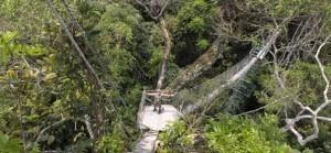 Pétrole ou forêt, l'Équateur a choisi : c'est quoi le projet Yasuni ? | Biodiversité | Actualité du monde associatif, du bénévolat, des ONG, et de l'Equateur | Scoop.it