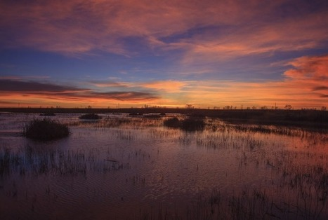 Photography workshop planned by Yolo Basin Foundation - Daily Democrat | Photography shows in Nashville Tn. | Scoop.it