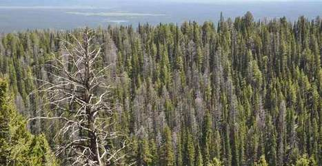 President Obama: Make Forestry a Priority in Your Climate Change Action Plan   Forestry   Scoop.it