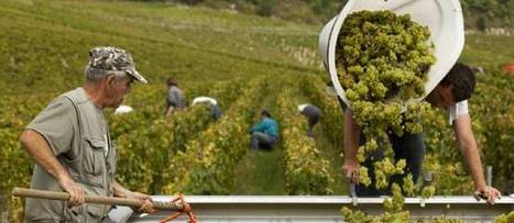 Bourgogne, retour sur le millésime 2013   Oenodidacte   Scoop.it