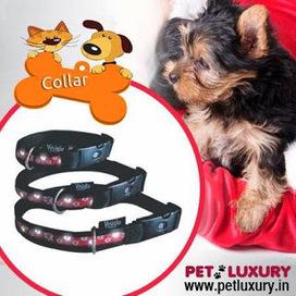 Buy Pet Accessories Online   Purchase Pet Supplies Online   Scoop.it