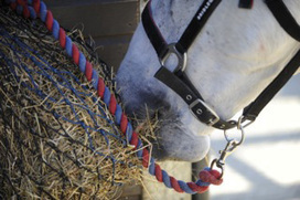 Signs of good health in your horse | FLP Horse Health | Scoop.it