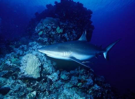 Diving oceano indiano, barriera corallina, live aboard. | ViaggiSudAfrica | Scoop.it