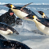 "Emperor Penguins: Escape Velocity - The Moment: Shooting Stars - Pictures, More From National Geographic Magazine | Buffy Hamilton's Unquiet Commonplace ""Book"" 