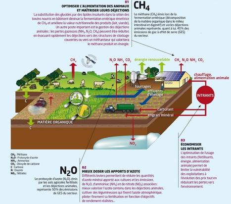 Pratiques et systèmes agricoles | Chimie verte et agroécologie | Scoop.it