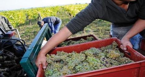 Comment les vignerons communiquent-ils à propos des vendanges sur Facebook ? | mon-ViTi | Communication Romande | Scoop.it