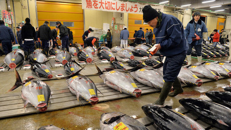 Radiation level in tuna off Oregon coast tripled after Fukushima disaster | Coffee Party News | Scoop.it