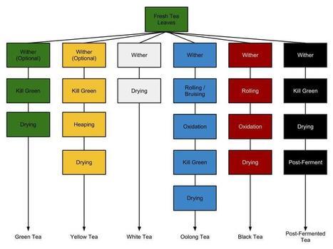 Tea Classification | terminology | Scoop.it