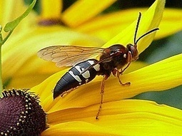Wasps and bees pest control | west palm beach Florida | Pest control West Palm Beach Florida | Scoop.it
