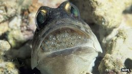 """The strange places fish live."" I love jawfish :) #ocean #scuba 
