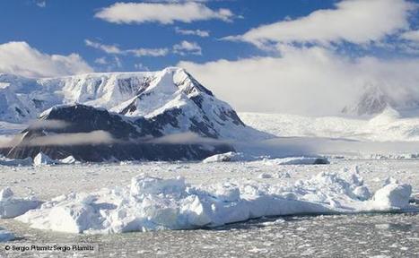 BBC Nature - Antarctic wildlife   Antarctica   Scoop.it