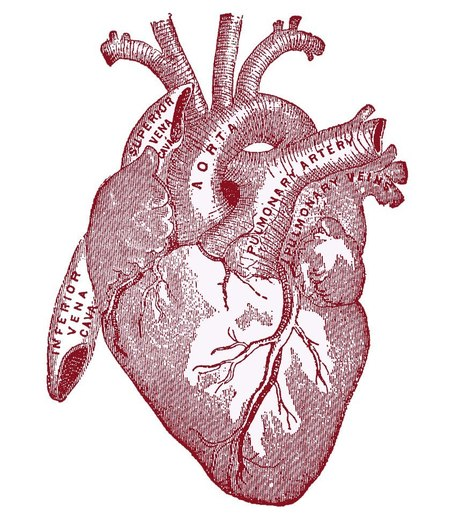 MEDICUS | Gene Offers an Athlete's Heart Without The Exercise | Topics in Science | Scoop.it