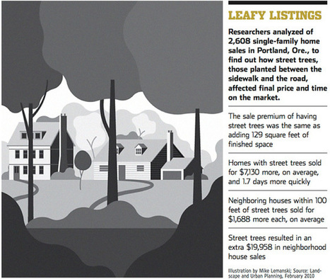 How trees can boost a home's sale price - MSN Real Estate | Tree Preservation Planning | Scoop.it