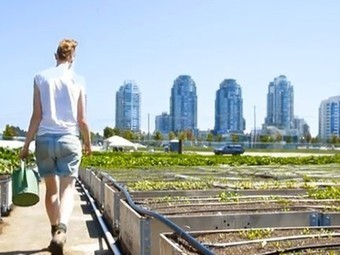 Vancouver's Sole Food opens largest urban orchard in North America | Verticale Tuinen | Scoop.it