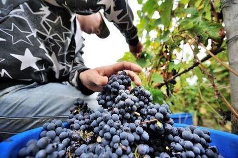 La préfète de Bourgogne Franche-Comté annonce des mesures de soutien de la viticulture | Le Vin et + encore | Scoop.it