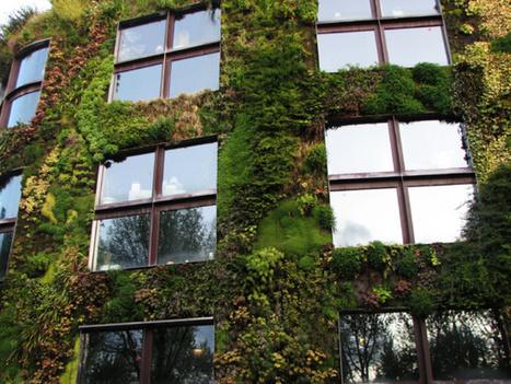 Végétaliser les villes contre la pollution et le réchauffement | actualité optimiste pour un monde durable | Scoop.it