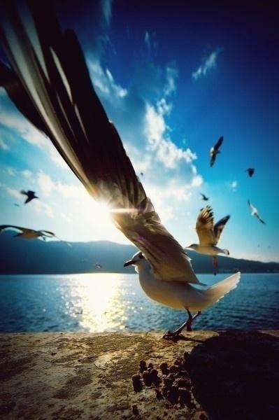 Seagull perspective.......l | Una imagen lo dice todo | Scoop.it