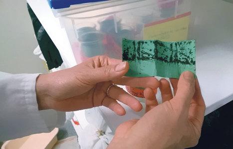 La science mondiale réunie contre Zika à l'institut Pasteur | EntomoScience | Scoop.it