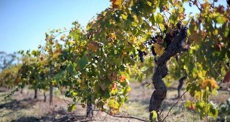 Simplification des importations de vignes en Chine | Le commerce du vin, entre mythe et réalité | Scoop.it