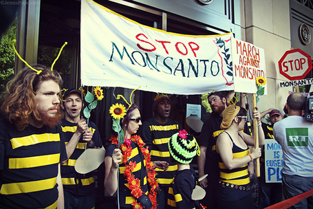 DC Activists Stage Bee Die-In at Monsanto's Lobbying Headquarters | Coffee Party News | Scoop.it