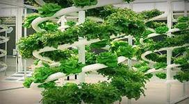 Cultivos hidropónicos: ¿Qué es el sistema NFT? | Cultivos Hidropónicos | Scoop.it