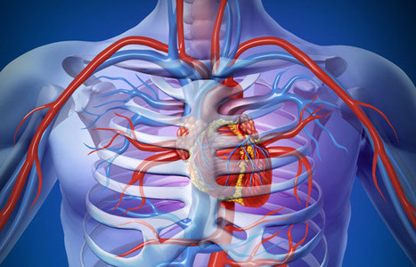 Researchers Uncover Molecular Pathway to Grow New Arteries | Biosciencia News | Scoop.it