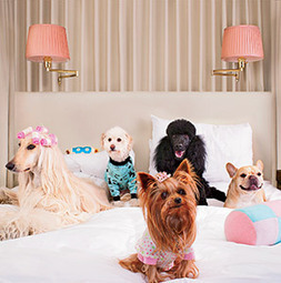 Dog-Friendly Hotels | Food for Pets | Scoop.it