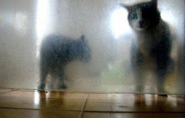 Lancer de chat dans une dispute conjugale : une passante blessée | Mais n'importe quoi ! | Scoop.it