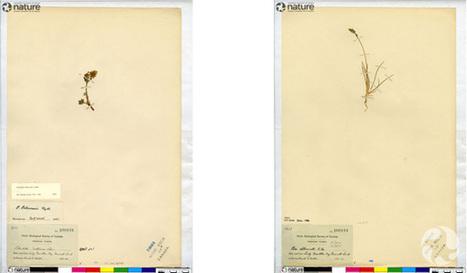 Un trésor botanique et culturel sous les yeux   Réseau Tela Botanica   Scoop.it