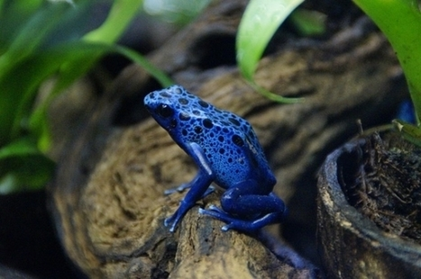 Poisonous Frogs Inspire Freeze-Resistant Airplanes | Biomimétisme, Biomimicry, Bioinspired innovation | Scoop.it