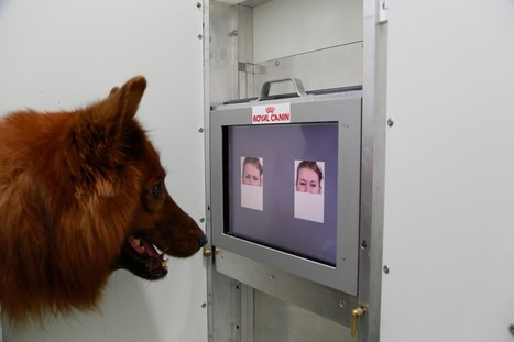 Happy face or angry face? A dog can tell the difference, study finds   EOH current topics   Scoop.it