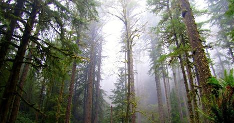 Elliott State Forest sale attracts four dozen prospective buyers | Timberland Investment | Scoop.it