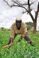 Le mot « paysan » : un frein à l'insertion des jeunes dans l'agriculture ! | Questions de développement ... | Scoop.it