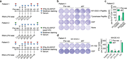 Systemic RNA delivery to dendritic cells exploits antiviral defence for cancer immunotherapy | Cancer Immunotherapy Review | Scoop.it