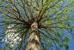 Five star tree company located in Riverview, FL - Tampa Tree Services. | Tampa Tree Services | Scoop.it