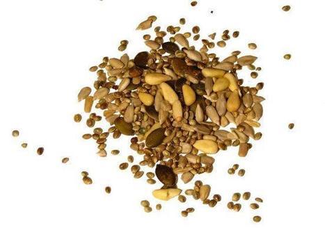 Las semillas: sus propiedades nutricionales y cómo incorporarlas a los platos | Semillas de calabaza (Curcubita pepo) | Scoop.it