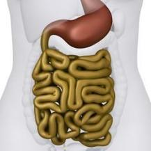 Gut bacteria and the brain: Are we controlled by microbes? | You are what you eat! | Scoop.it