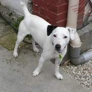 Dog Poisoned And Buried Alive - Back From Dead | Quite Interesting News | Scoop.it