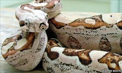 "Cobra ""virgem"" dá à luz a filhotes sem pai | Ciencia al día | Scoop.it"