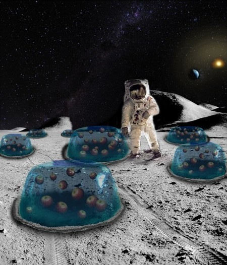 Social News Source: NASA's Next Frontier: Growing Plants On The Moon   Best Social Media on the Web   Scoop.it