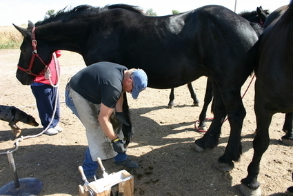 Colder Months Bring Horse Hoof Care Difficulties | Horse Kinetics | Scoop.it