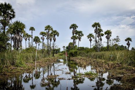 7-18 de Noviembre: COP22 | Educación Ambiental y TIC | Scoop.it