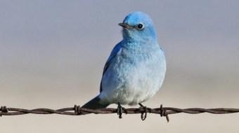 Twitter déploie la double authentification | CommunityManagementActus | Scoop.it