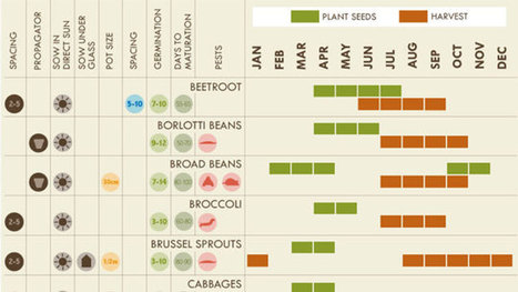 Everything You Need to Know About Vegetable Gardening in One Graphic | Vertical Farm - Food Factory | Scoop.it