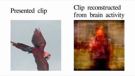 Scientists Reconstruct Brains' Visions Into Digital Video In Historic Experiment | Amazing Science | Scoop.it