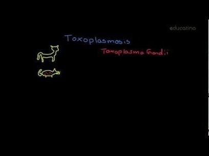 Toxoplasmosis - Salud - Educatina | toxoplasmmosis Toxoplasma gondii | Scoop.it