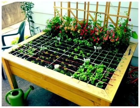 L'association de plantes en pot | agriculture urbaine | Scoop.it